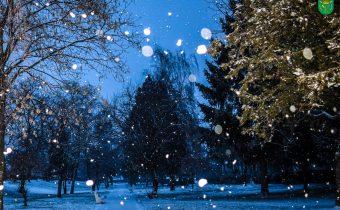 Nyárasdi tél